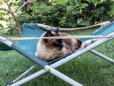 gatto-sulla-sdraio
